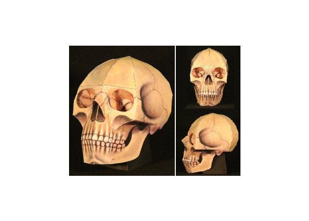 the-human-skull -kit168.com