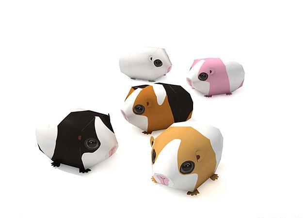 guinea-pig -kit168.com