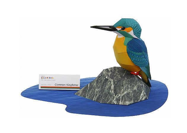 common-kingfisher -kit168.com