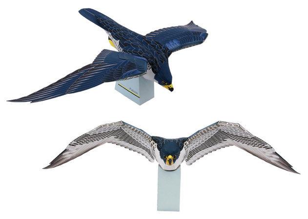 falcon-1 -kit168.com