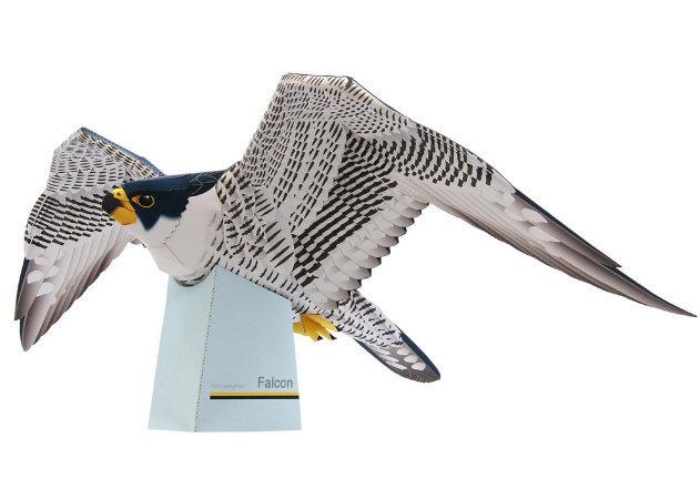 falcon -kit168.com