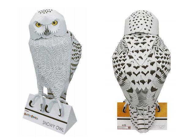 snowy-owl-1 -kit168.com