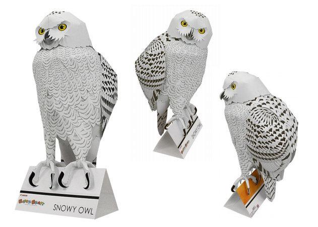 snowy-owl -kit168.com