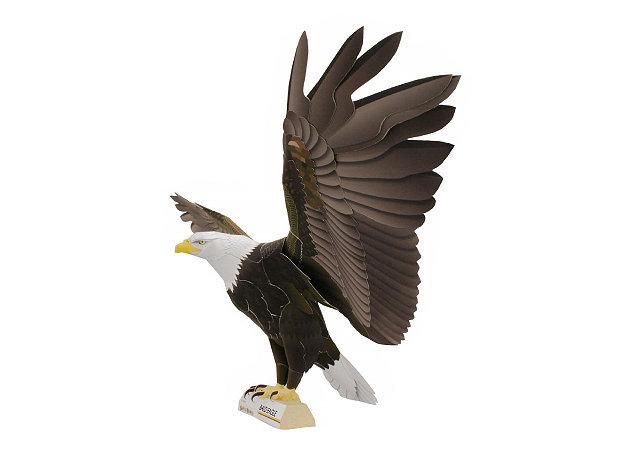 bald-eagle-2 -kit168.com