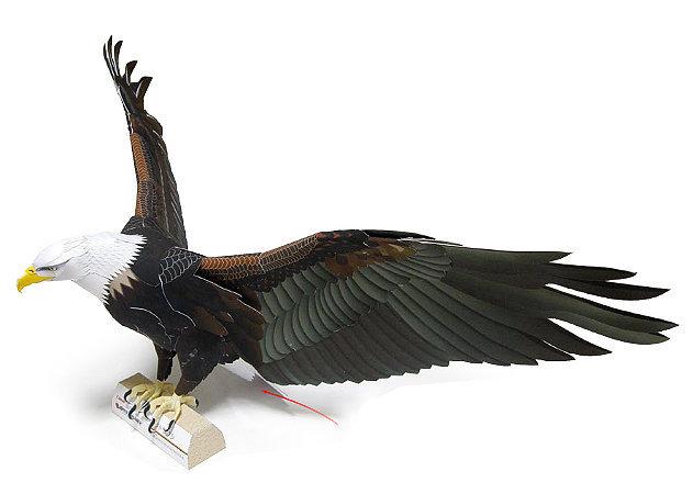 bald-eagle-3 -kit168.com