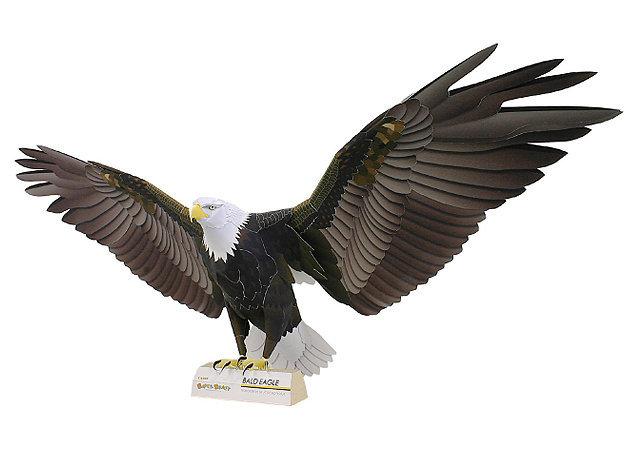 bald-eagle -kit168.com