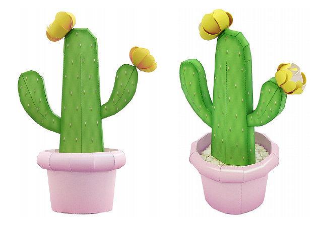 cactus-prickly-pear-cay-xuong-rong -kit168.com