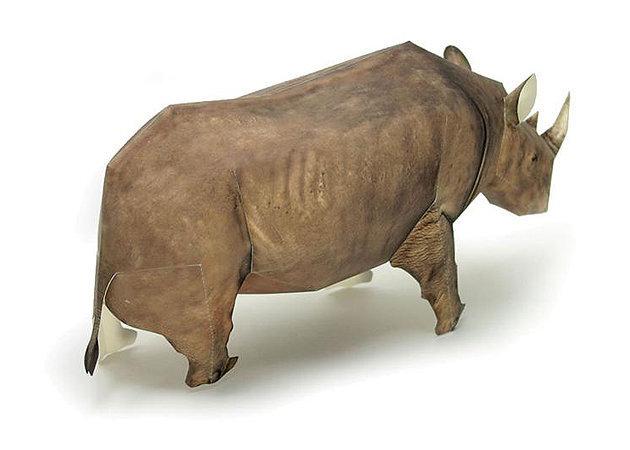 black-rhinoceros-1 -kit168.com