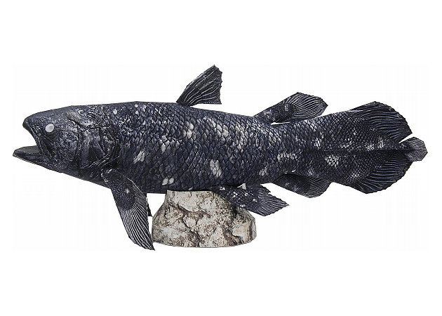 coelacanth -kit168.com