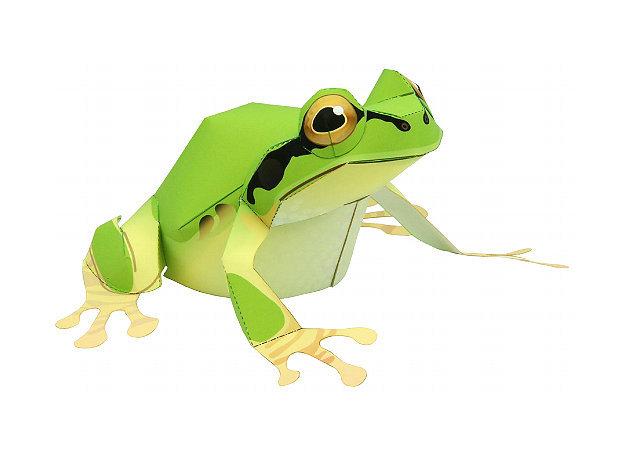 tree-frog -kit168.com