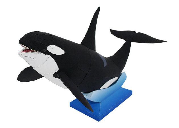 orca -kit168.com