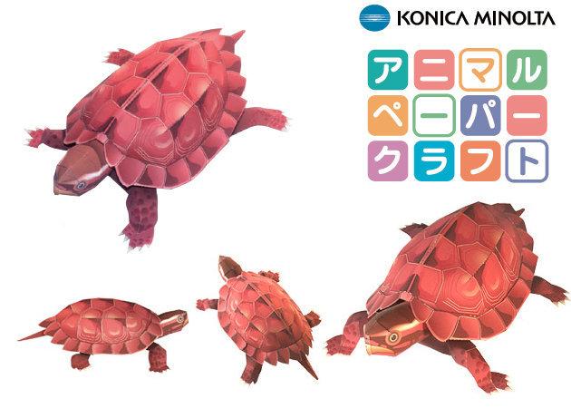 ryukyu-leaf-turtle-1 -kit168.com