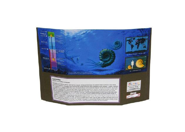 ammonite-fossil-2 -kit168.com