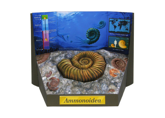ammonite-fossil -kit168.com