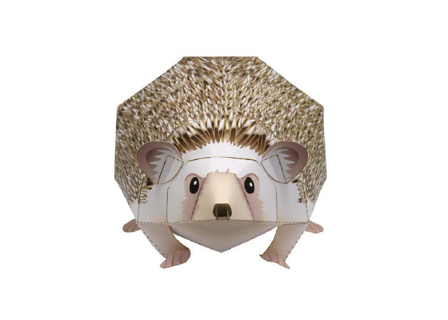four-toed-hedgehog-1 -kit168.com