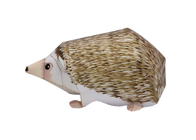 four-toed-hedgehog-2 -kit168.com