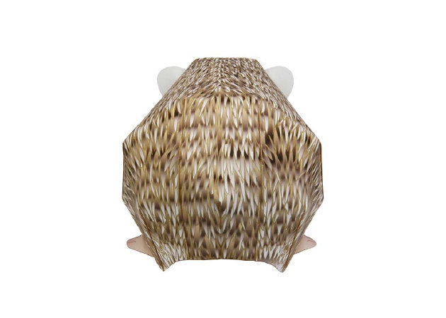 four-toed-hedgehog-3 -kit168.com