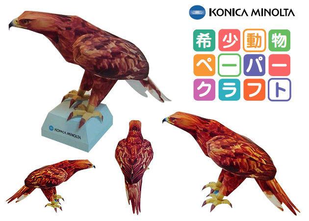 golden-eagle -kit168.com
