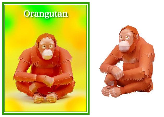 orangutan -kit168.com