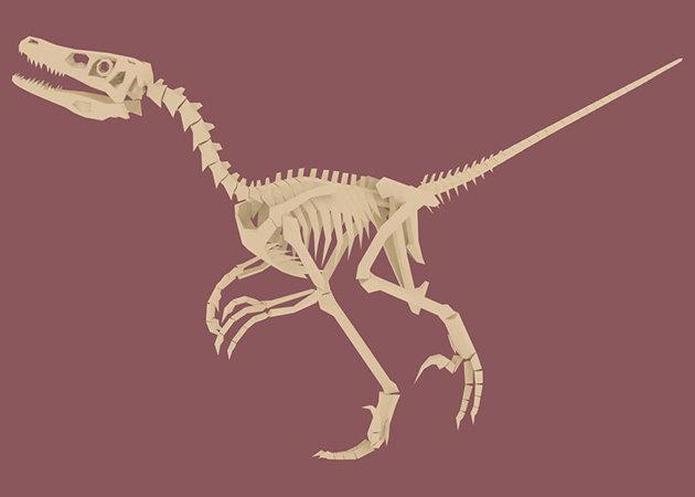 the-great-velociraptor-skeleton-1-1 -kit168.com