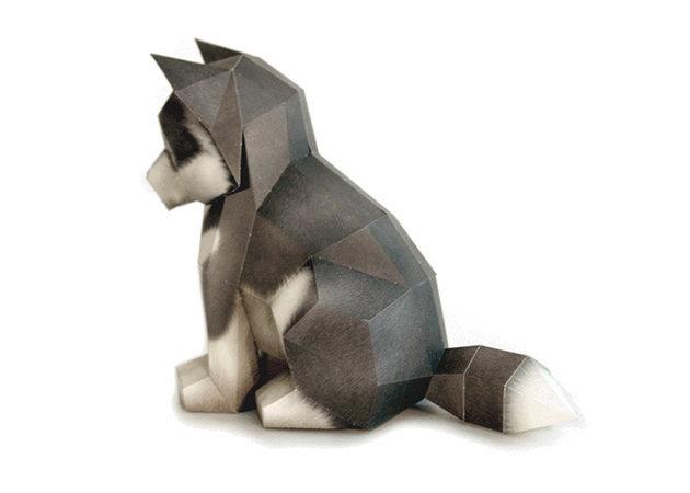 cho-husky-con-2 -kit168.com