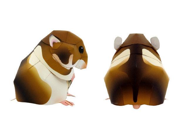 syrian-hamster-1 -kit168.com