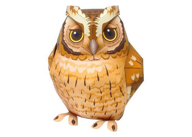 megascops-choliba-tropical-screech-owl-kit168-com