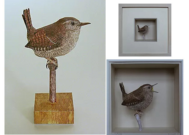 chim-the-wren-kit168-com