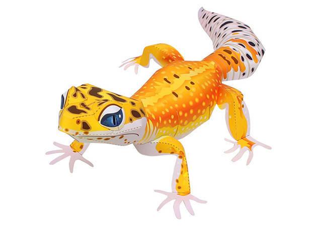 leopard-gerko-kit168-com