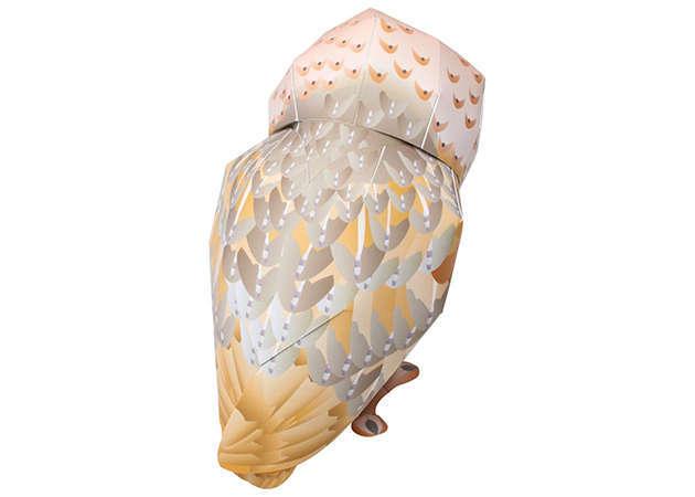 cu-lon-lung-xam-barn-owl-1-kit168-com