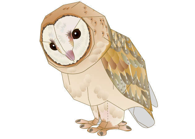 cu-lon-lung-xam-barn-owl-3-kit168-com