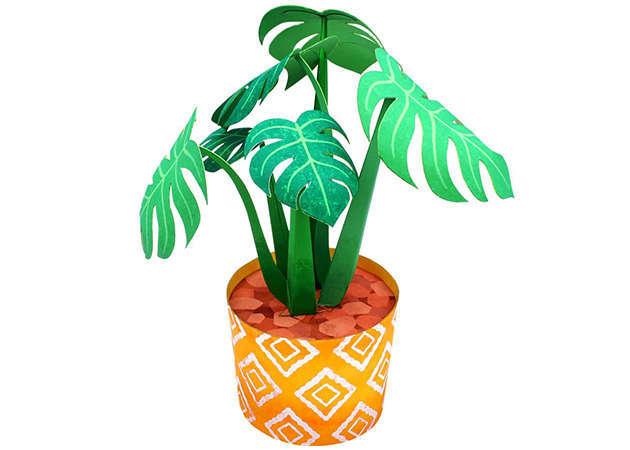 cay-monstera-kit168.com