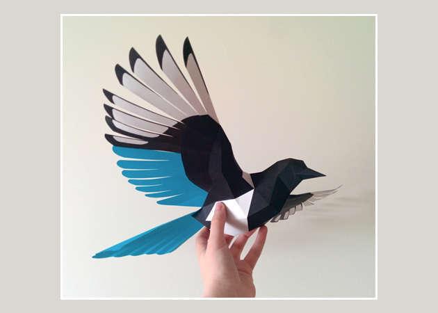 chim-magpie-1-kit168.com