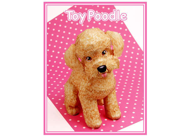 cho-toy-poodle-ver-2-kit168.com
