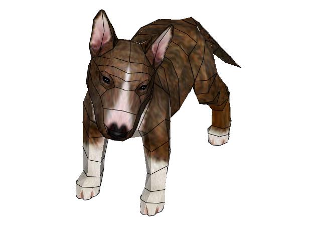 cho-bull-terrier-4-mau-2