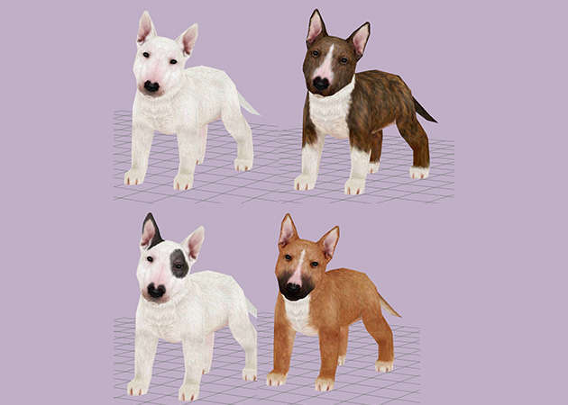 cho-bull-terrier-4-mau-kit168.com