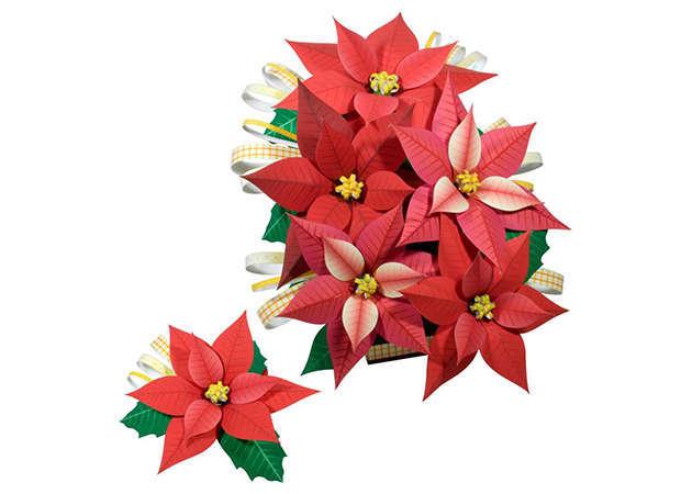 hoa-trang-nguyen-poinsettia-kit168.com
