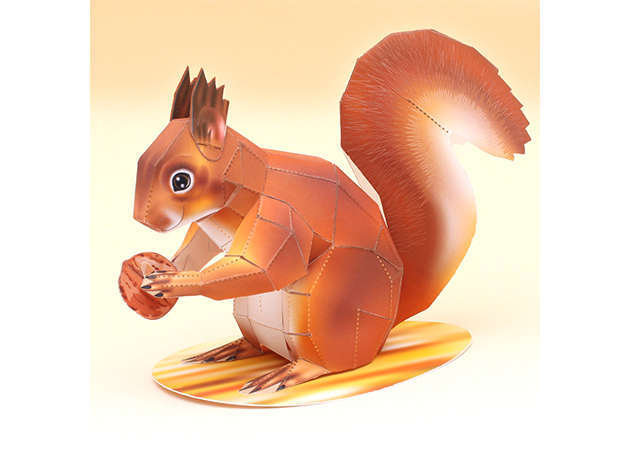 american-red-squirrel-1-kit168.com