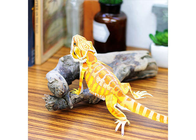 central-bearded-dragon-1-kit168.com