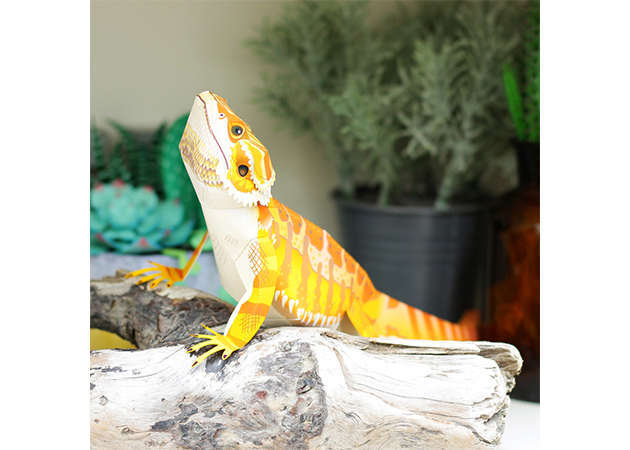 central-bearded-dragon-kit168.com
