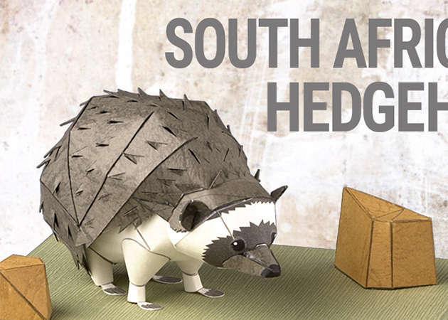 south-african-hedgehog-kit168.com