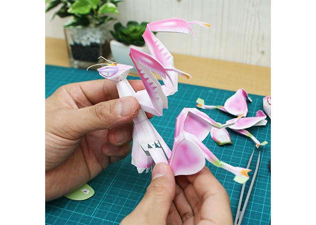 bo-ngua-hoa-phong-lan-3-kit168.com